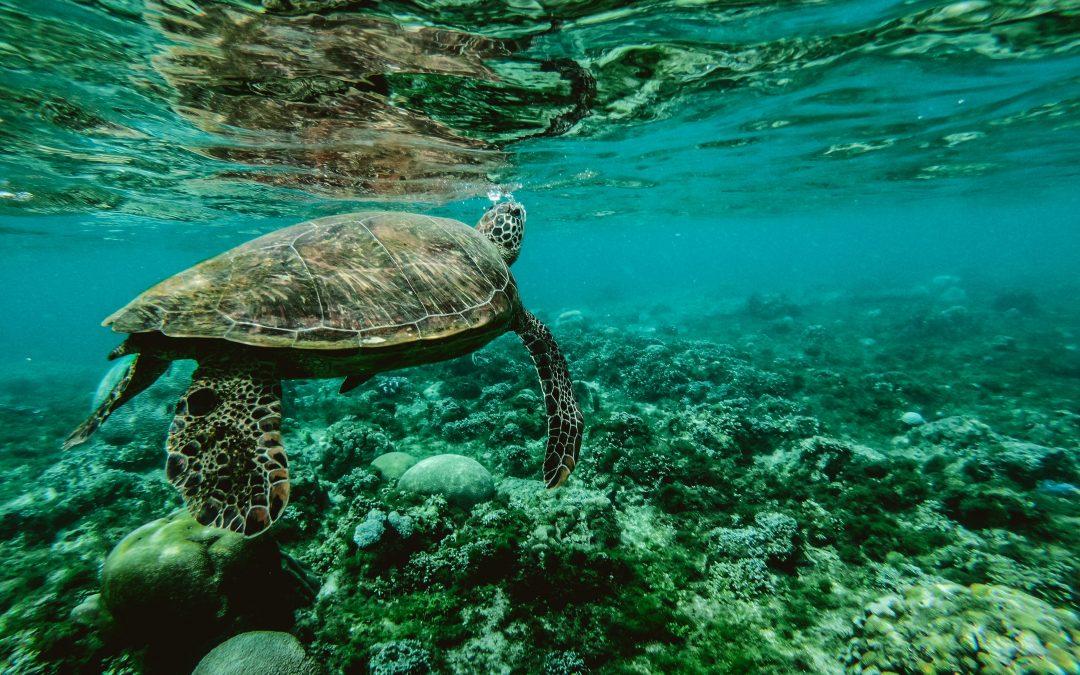A tenger legváltozatosabb kincsei, az algák